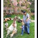 Goats trim the tree